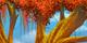 https://us.ohmydollz.com/design/fiche_maison/maison/_arbreautomne_branches_1.png